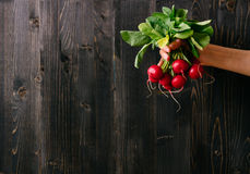 Organische groenten Handen die verse radijs houden Zwarte houten achtergrond met exemplaarruimte stock afbeelding