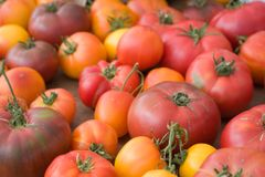 Organische Heirloomtomaten - verschiedene Farben Stockfotos