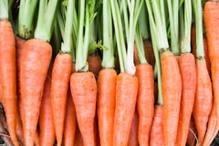 Organische Karotte mit grünem Blatt Lizenzfreies Stockbild