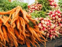 Organische Karotten und Rettiche Lizenzfreie Stockbilder