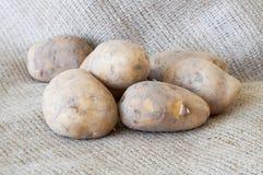 Organische Kartoffeln Lizenzfreies Stockfoto