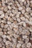 Organische Katoenen zaden Achtergrond stock foto's