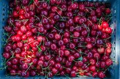 Organische Kersen Royalty-vrije Stock Foto's