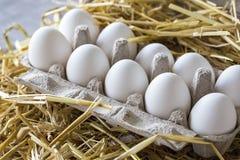 Organische kippen ruwe eieren Royalty-vrije Stock Foto's