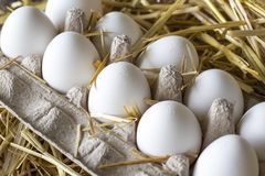 Organische kippen ruwe eieren Stock Foto's