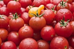 Organische Kirschtomaten am Markt wählten frisch vom Garten aus Stockfotos