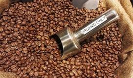 Organische koffiebonen Royalty-vrije Stock Afbeelding