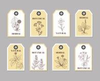 Organische Krautaufkleber für Naturprodukte und kulinarisch lizenzfreie abbildung
