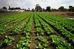 Organische landbouw Royalty-vrije Stock Fotografie