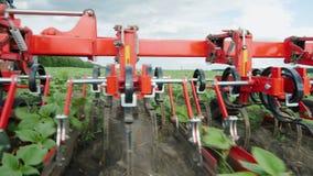 Organische landbouw De tractorploeg verwijdert onkruid uit vlotte zonnebloemspruiten stock video
