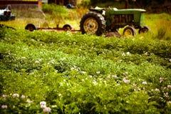 Organische landbouwbedrijfscène Stock Foto