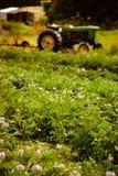 Organische landbouwbedrijfscène Royalty-vrije Stock Foto's