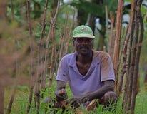 Organische Landwirtschaft stockfoto