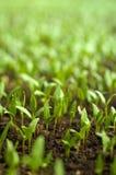 Organische Landwirtschaft Stockbilder