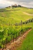 Organische Landwirtschaft in Toskana, Italien stockfotos