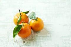 Organische mandarijntjes met bladeren Stock Fotografie