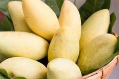 Organische Mangofrucht Stockbilder