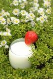 Organische Milch mit Erdbeere Stockbilder