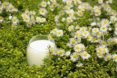 Organische Milch, weicher Fokus Stockbild