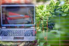 Organische moestuin, en licht in ochtend op een gesloten Niet-toxisch landbouwbedrijfsysteem en het computerscherm die voorraad h stock foto's