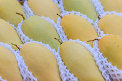 Organische Nam Dok Mai-mango's voor verkoop bij de fruitmarkt Na Royalty-vrije Stock Afbeeldingen