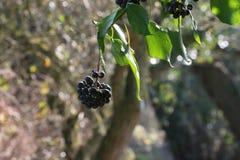 Organische Obstsorte auf Holz Stockfoto