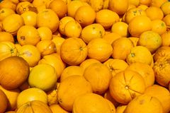 Organische orange Ernte, Süd-San Francisco Bay Bereich San Jose, Kalifornien stockbilder