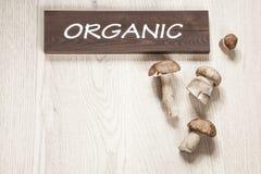 Organische paddestoelen Stock Fotografie