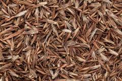 Organische Palmarosa (Cymbopogon-martinii) zaden stock foto