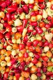 Organische paprika Royalty-vrije Stock Foto's