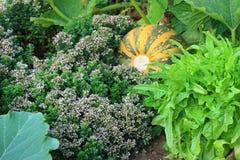 Organische permaculturetuin stock foto's