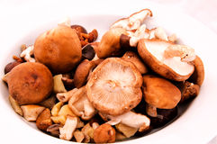 Organische Pilze Stockbild