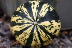 Organische pompoen Stock Foto