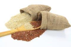 Organische Quinoa. Stock Foto