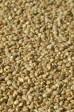 Organische Quinoa Zaden Macrotextuur Als achtergrond Royalty-vrije Stock Foto