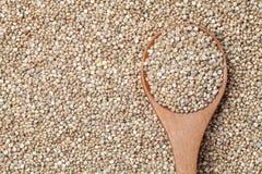 Organische Quinoasamen Stockbild