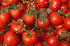 Organische Rebe-Tomaten Stockbild