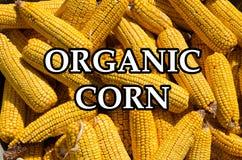 Organische reife Maiskolben Lizenzfreies Stockbild
