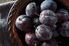 Organische reife purpurrote Prune Plums Stockfotografie