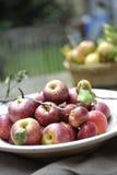 Organische Rode Appelen Stock Foto's