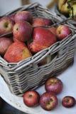Organische Rode Appelen Stock Afbeeldingen