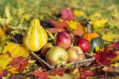 Organische rode appelen, pompoenen en de herfstbladeren in een de herfsttuin Royalty-vrije Stock Afbeeldingen