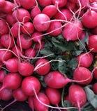 Organische Rode Radijzen Stock Afbeelding