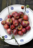 Organische rote Äpfel Lizenzfreies Stockfoto