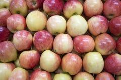 Organische rote Apfelgruppe Stockbild