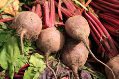 Organische Rote-Bete-Wurzeln Stockfoto