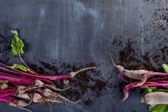 Organische Rote-Bete-Wurzeln mit Boden Stockfotografie