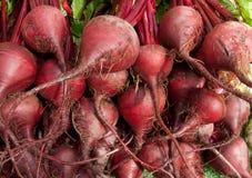 Organische rote Rüben Stockbild