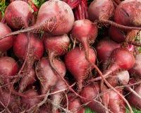 Organische rote Rüben Lizenzfreie Stockfotos