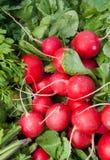 Organische rote Rettiche Stockbilder